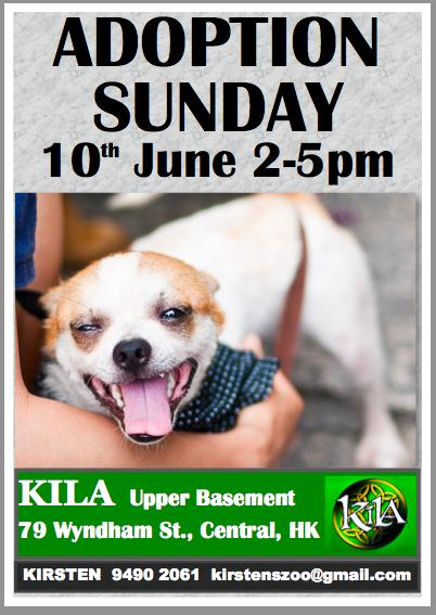 Dog adoption day poster 10Jun12
