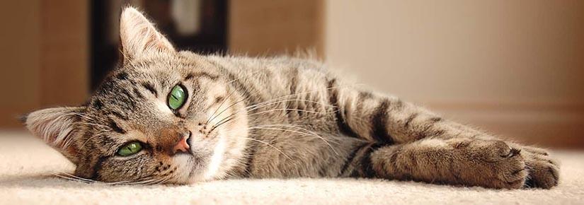 寵物情緒及健康管理
