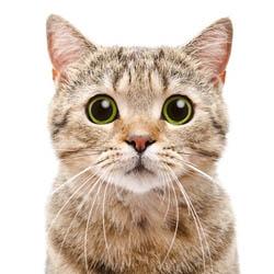 貓貓新成員