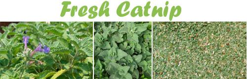 INGREDIENTS_Catnip