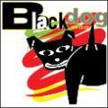 行為糾正狗帶 - Black Dog